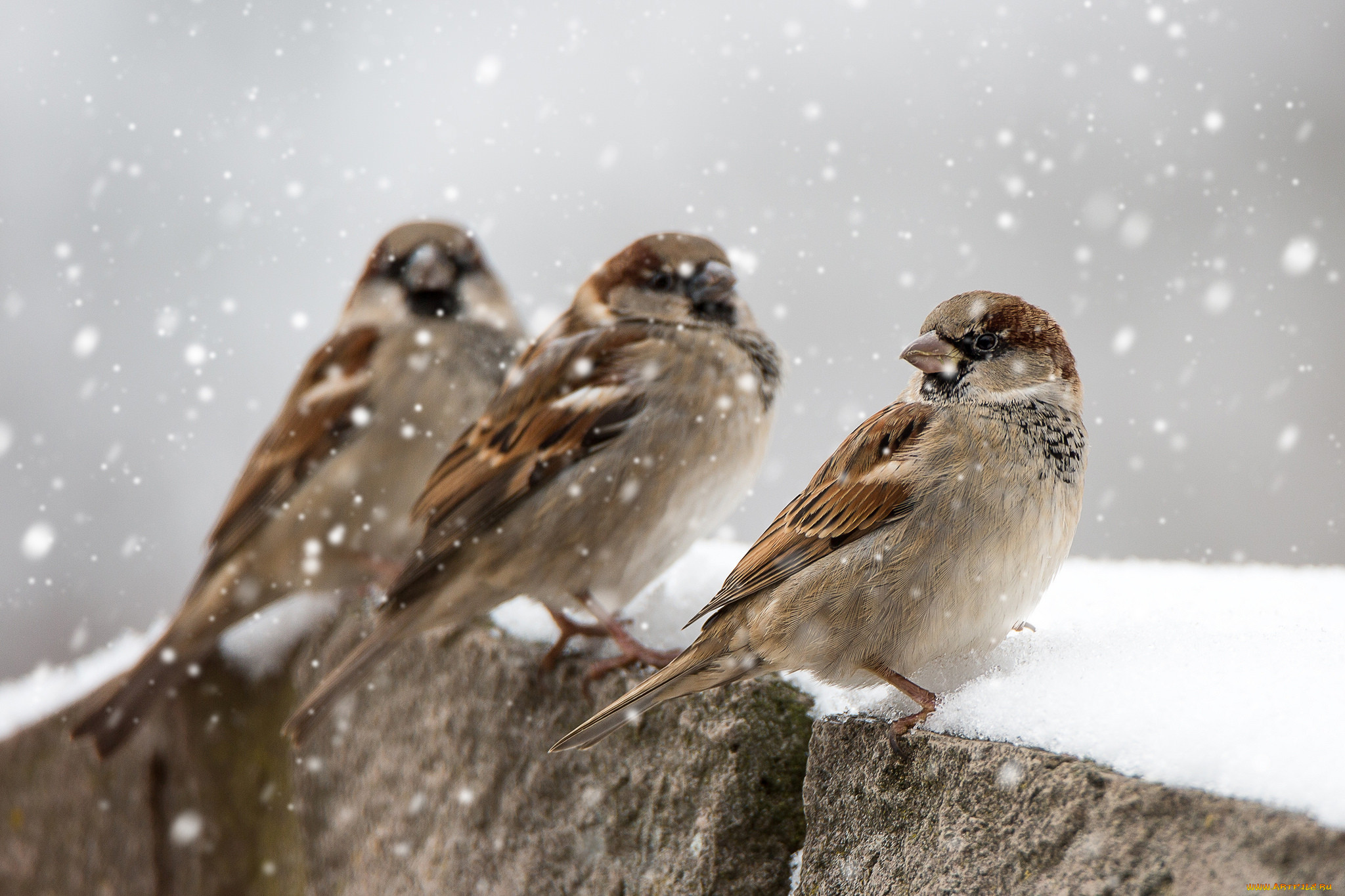 Картинки по запросу зима животные